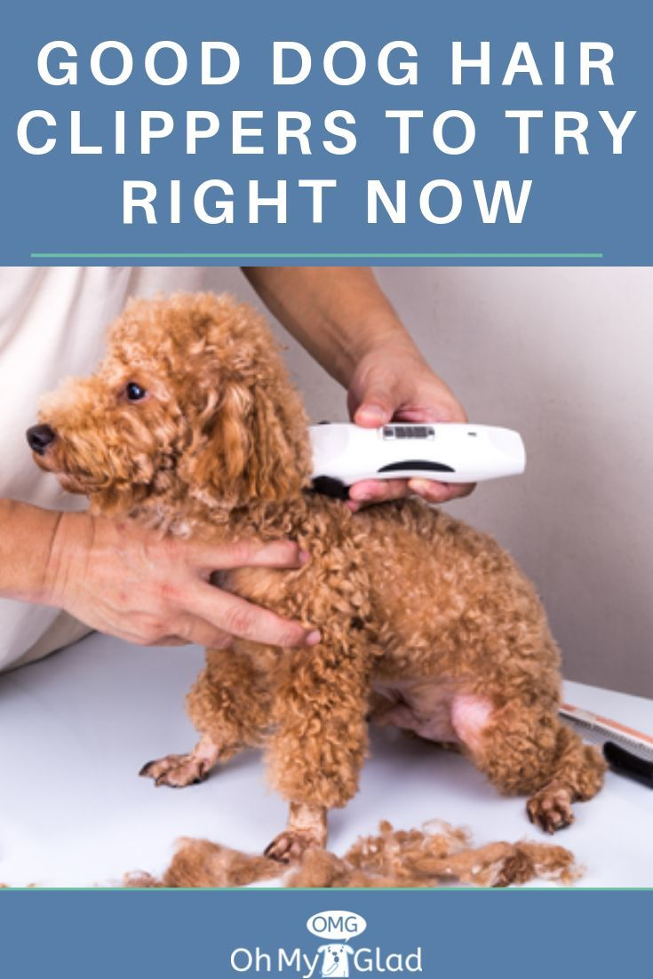 Good Dog Hair Clippers to Try Right Now  Dog clippers, Dog hair
