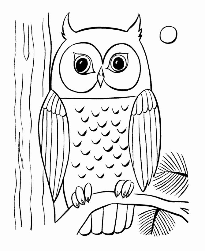 Coloring Pages Nocturnal Animals Beautiful Owls Animal Coloring