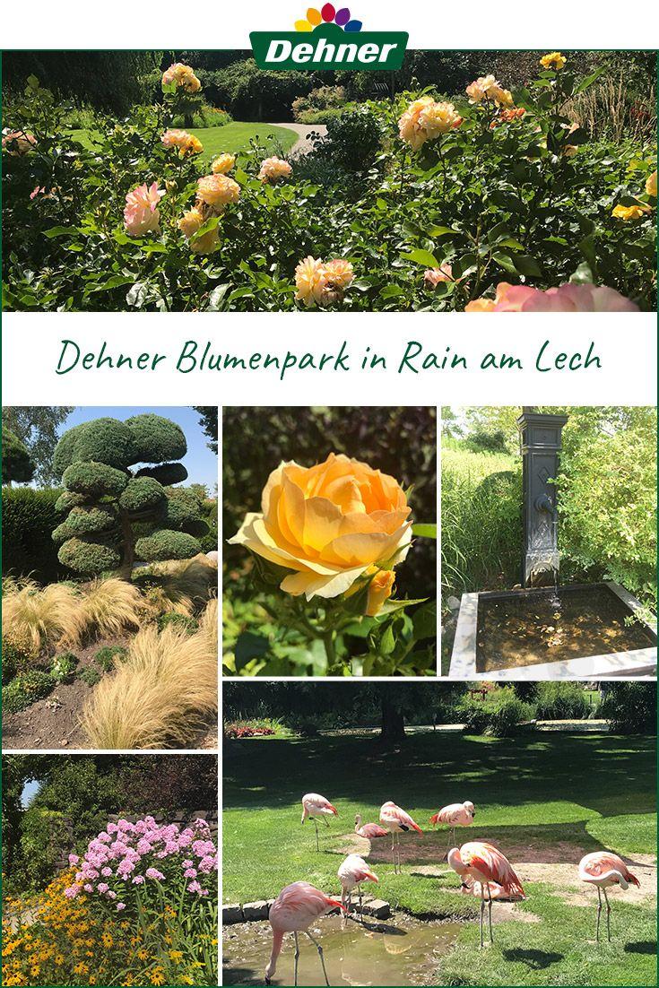 Impressionen Aus Dem Dehner Blumenpark In Rain Am Lech Garten Gartencenter Gartengestaltung