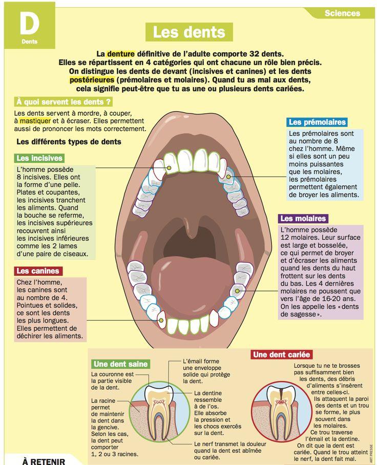 Les dents                                                                                                                                                                                 Plus