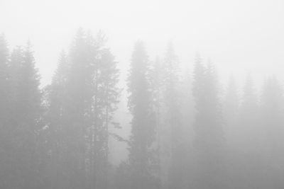 Anna Höglin - Mystique, fog, forrest, black & white photo art, prints & posters