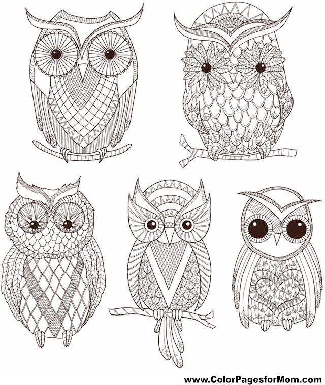 2212782fe1136bd6576739f529f30b66  owl coloring pages adult coloring furthermore 25 best ideas about owl coloring pages on pinterest free on coloring pages for adults with owls additionally free adult coloring pages detailed printable coloring pages for on coloring pages for adults with owls in addition printable coloring pages for adults 15 free designs  on coloring pages for adults with owls in addition adult owl coloring page getcoloringpages  on coloring pages for adults with owls
