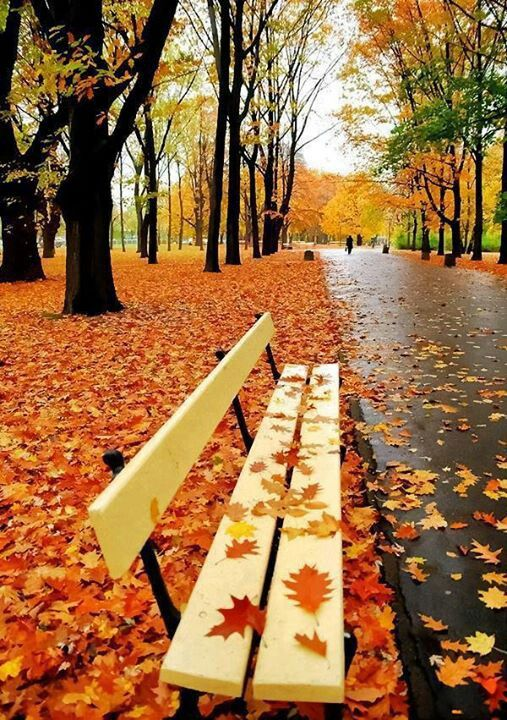 autumn leaves on bench - photo #20