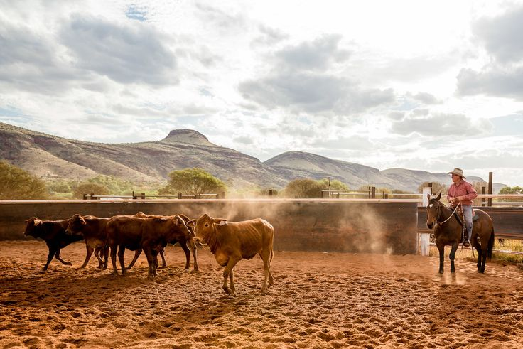 Tom Price Campdraft 2017 by Tom Price Photographer Felicity Ford