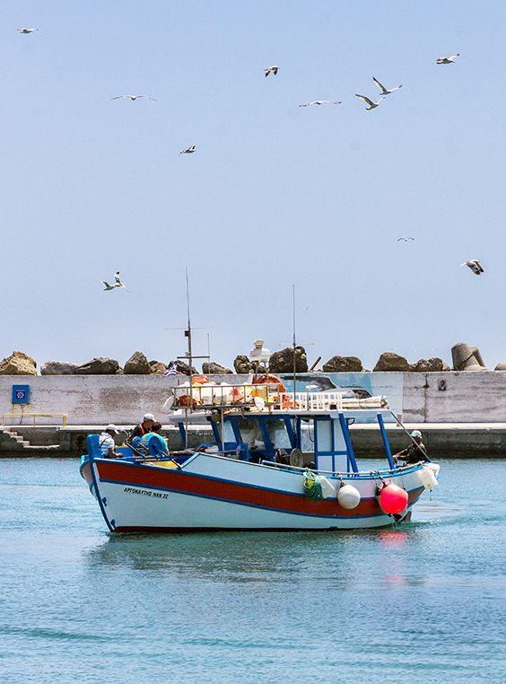 Möwen ziehen ihre Kreise am Himmel und begleiten die Rückkehr der Fischerboote in den Hafen von Ierapetra auf der Insel Kreta. Dies ist ein tägliches Spektakel, denn die Boote und ihr Fang werden bereits erwartet: Von Tavernenbesitzern, Fischhändlern oder Einheimischen, die Fisch und Meeresfrüchte direkt vom Boot kaufen. #greece #crete #lasithi #ierapetra #boat #port