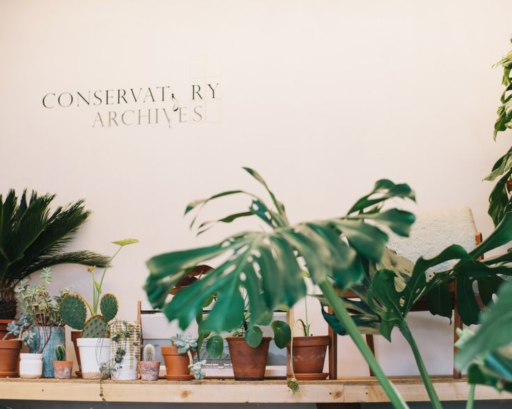 Conservatory Archives in Hackney