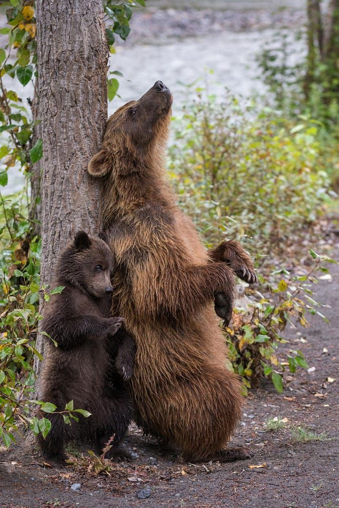 schubiduuu by Marion Vollborn on 500px #bears / bear with baby / animal photography pictures / photos