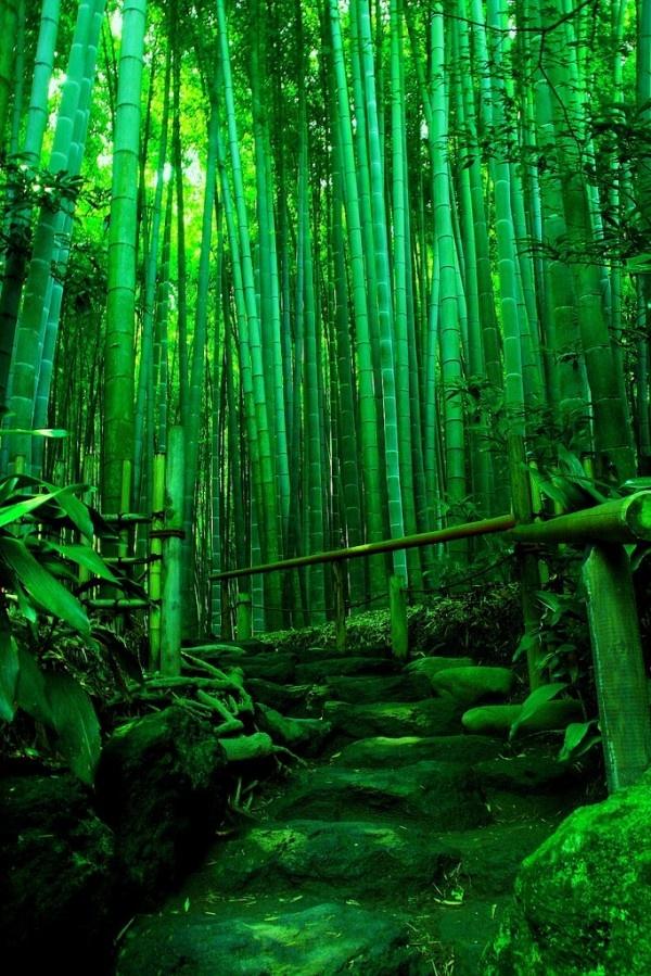 Green tea alley, Hokokuji-Temple, Kamakura, Kanagawa, Japan - Fabulous Traveling