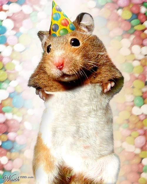 funny hamster pictures for kids - photo #29