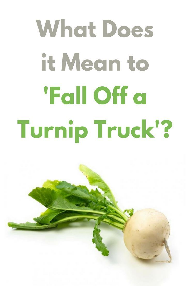 What Does It Mean To Fall Off A Turnip Truck Turnip Turnip Head Advanced English Vocabulary