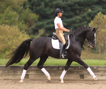 Donarweiss GGF, Hanoverian stallion. This horse is pretty much perfection and beauty summed up.