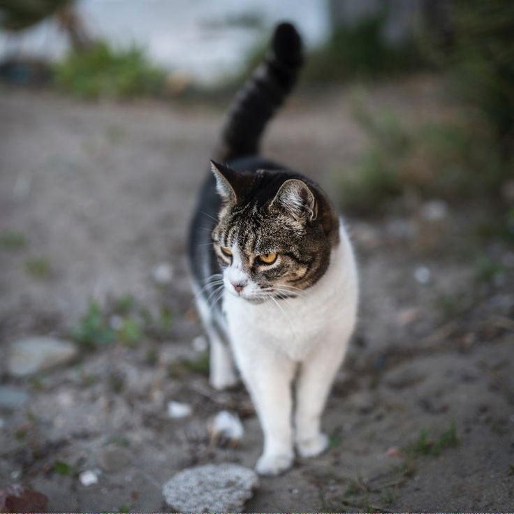Cats for sale near me catscharacters id909672759 cat