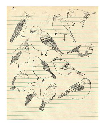 I think some little drawings of birds would be cute on the illustrations