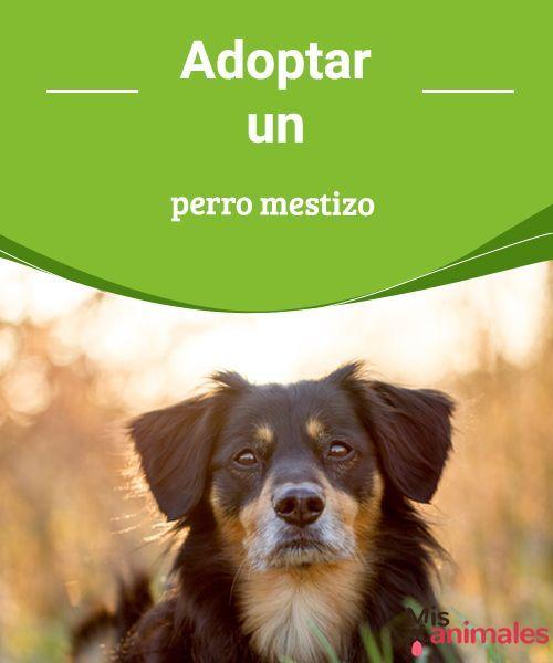Adoptar un perro mestizo   La mayoría de las personas desean adoptar un perro de raza, pero hoy te vamos a hablar de las ventajas de adoptar un perro mestizo. #adoptar #perro #mestizo #consejos