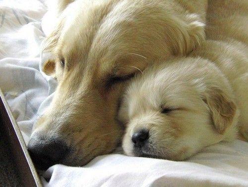 awww snuggles