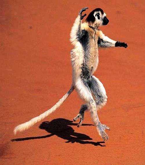 А так умеете? фото приколы животных, фото приколы, фотоприколы, фотоприколы животных кошек собак, смешные фото, смешные фото животных кошек собак котят, прикольные фото животных кошек котят собак