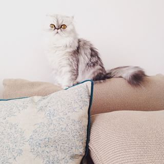 """WHAT DO YOU MEAN THIS COUCH ISN'T STAIN RESISTANT?"" 
