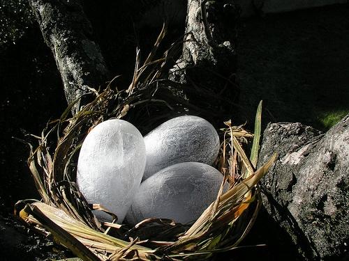 Niu / Nest