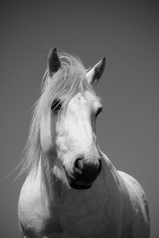 SALE white horse photo black and white by MitchMcfarlanePhotos, £10.00