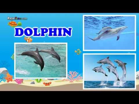 Learn Fish and Sea Animals Vocabulary for Kid and Children