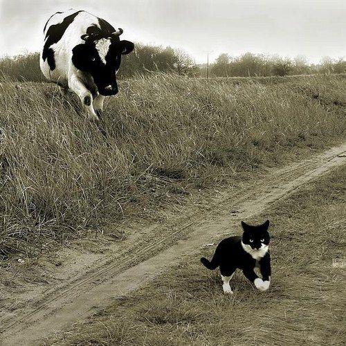 Les plus belles photographies de chats - Photo 42
