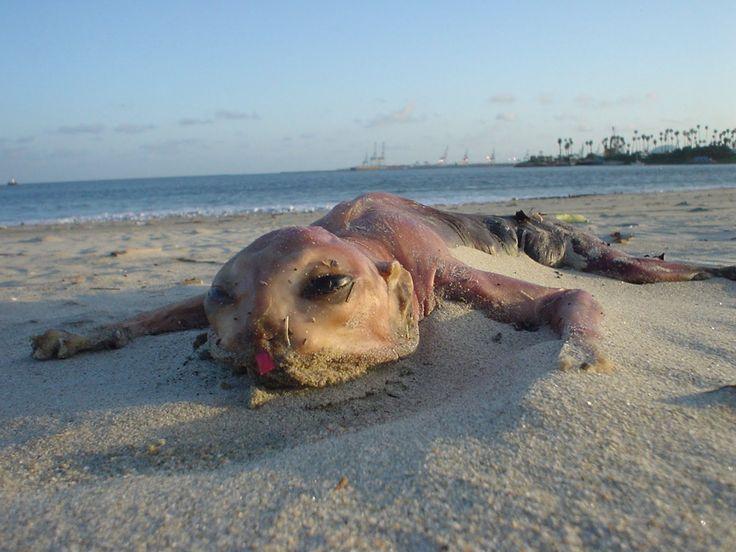 the unexplained | ... Unexplained Mysteries: The Canvey Island Monster: Unexplained Creature
