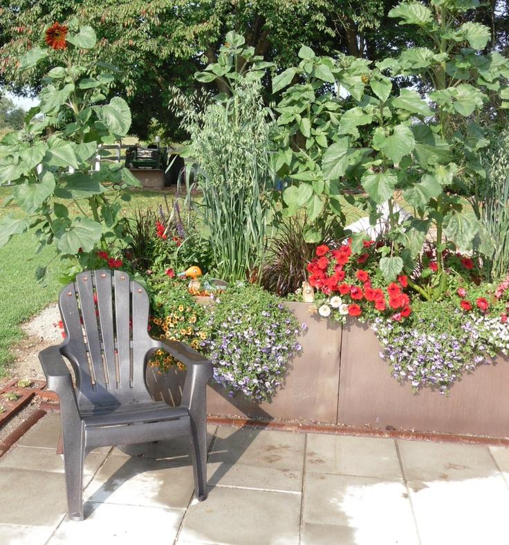 279 Best Urban Gardening Images On Pinterest | Plants, Urban Gardening And  Gardening