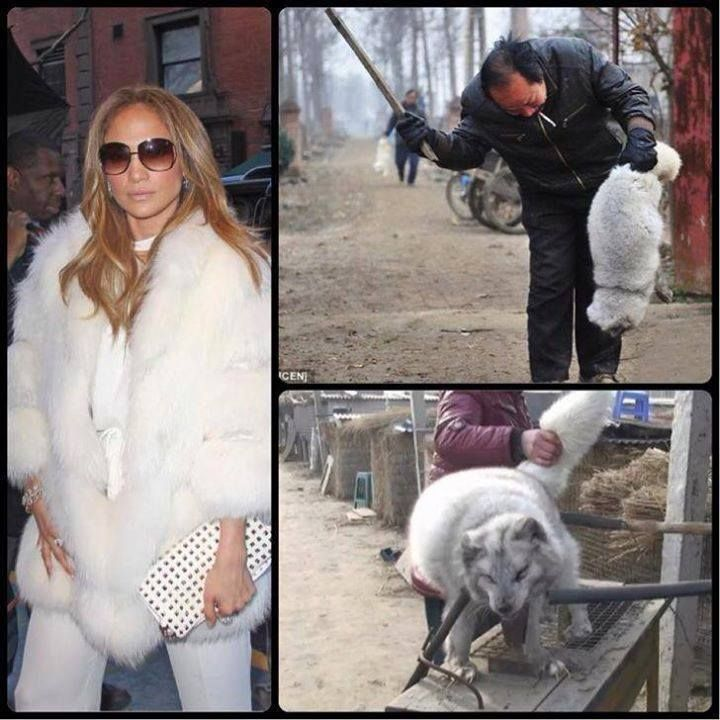 Ban Fur Farms in China and elsewhere - People Please Do Not Wear Any Fur, Fur Trim or Fake it could be Real