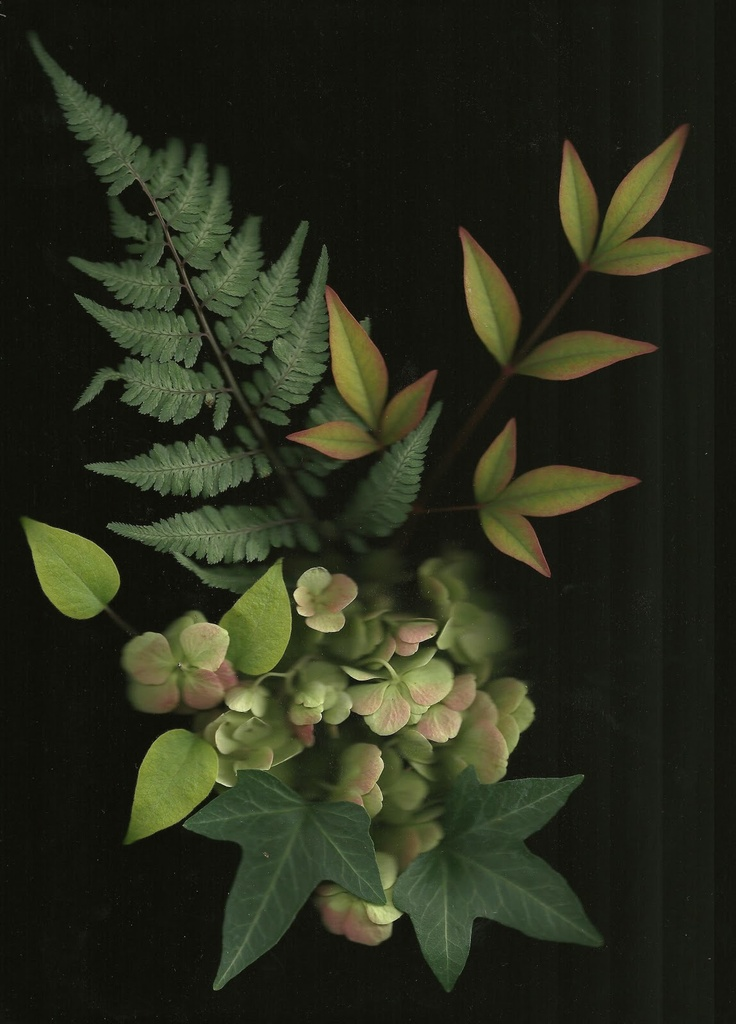 Signature Gardens: Garden Scans for October: Plea Image, Gardens Scanning, Signature Gardens, Scanning Flowers, Please Image, Photo Scanning, Blog Ideas, Gardens Scans, Pictures Perfect