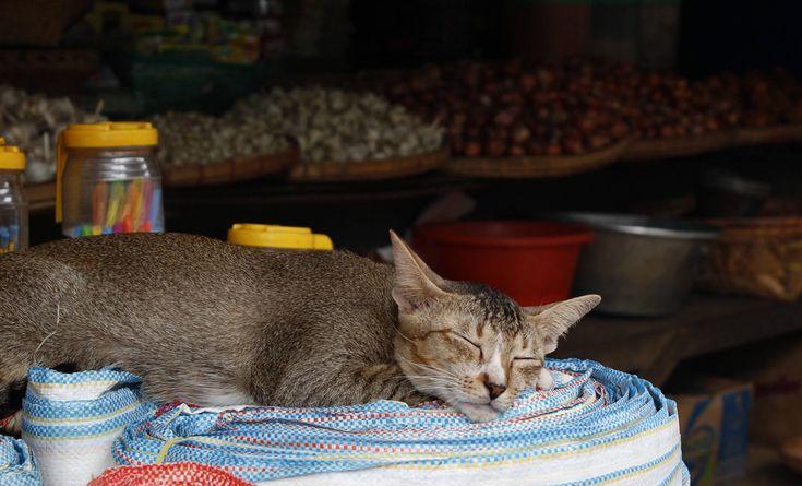 ITAP of a sleeping cat in Thanlyin Myanmar.