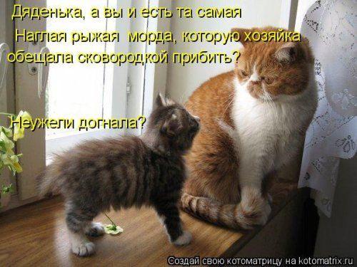 Ночная котоматрица (12 шт)