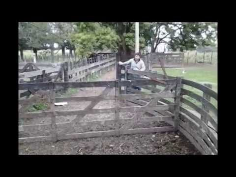 30 Year Old Wooden Cattle Handling Facility Youtube