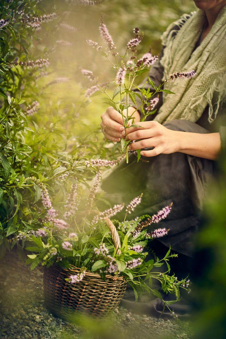 En praktbok med utgangspunkt i livet og oppskriftene til Christine Storm  Munch (oldemora til Edvard Munch). Målgruppa er et stadig større historie-  og matinteressert publikum som søker kunnskap og inspirasjon rundt råvarer,  riktig utnytting av naturen, kortreist, selvdyrket og selvgjort mat.