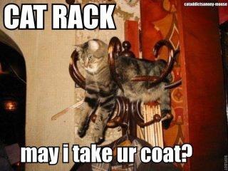 cat rackCoats Racks, Funny Pictures, Cat Racks, Funny Quotes, Cat Naps, Strange Places, Funny Cat Pics, Adorable Animal, Cat Photos