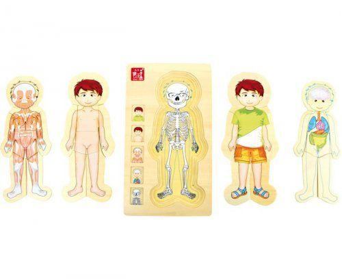 Ξύλινο παζλ ανατομίας Tim/ Wooden Puzzle Anatomy Tim