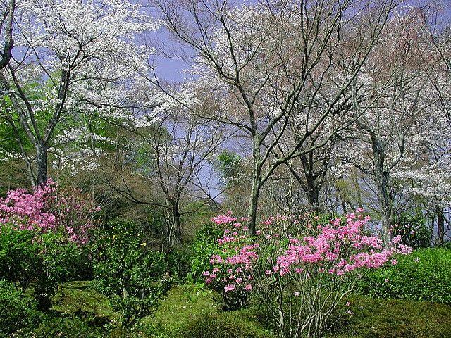 https://flic.kr/p/CHm4R | 春色(spring colors) | 京都天竜寺庭園