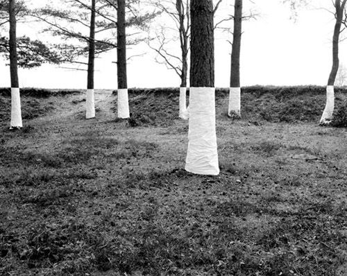 """artist and photographerzander olseneliminates the distinction between foreground and background in his ongoing series """"tree line."""""""