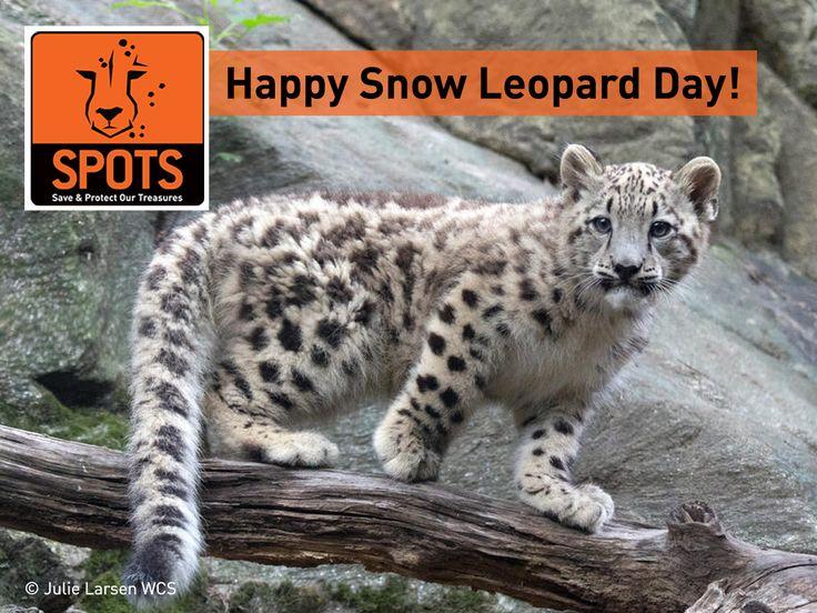 Happy 'International Snow Leopard Day'!