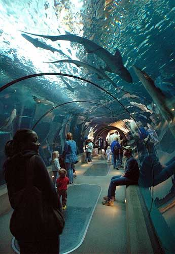 The Oregon Aquarium Off Of Highway 101 In Newport Oregon