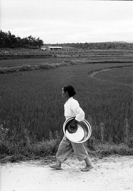 Woman Carrying Brass-Colored Basin, Near Euijeongbu, 1968   by Homer Williams