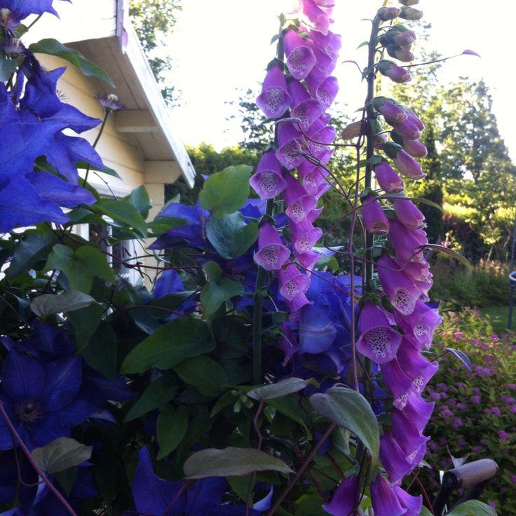 Blomster i hage min