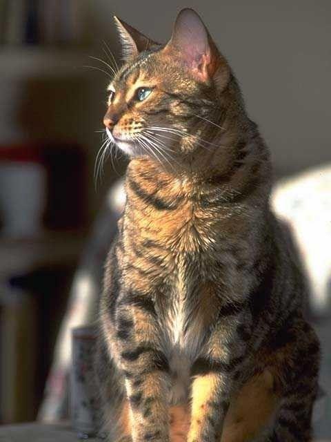 I'm 35 and Single. Is It Time to Get a Cat? ~ From a friend at Hub Pages.