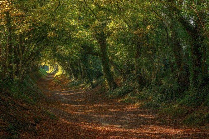 Дорога в Халнакер, Великобритания  Этот поистине сказочный тоннель находится недалеко от городка Халнакер, графство Сассекс, Англия. Он пользуется невероятной популярностью у фотографов, что совсем не удивительно.