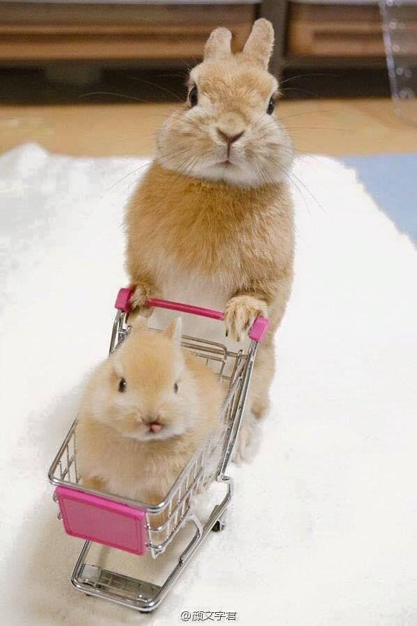 Ben quoi je fais comme vous au supermarché.... avant de mettre les courses.