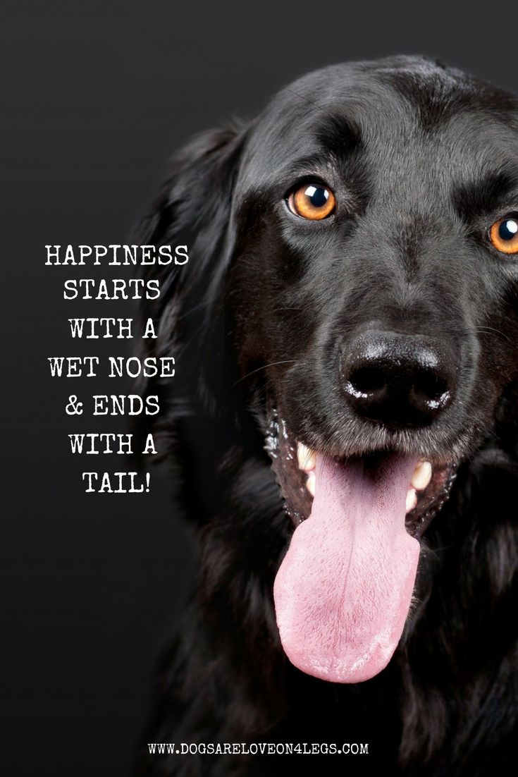 Happiness Starts With A Wet Nose Ends With A Tail Dog Quote