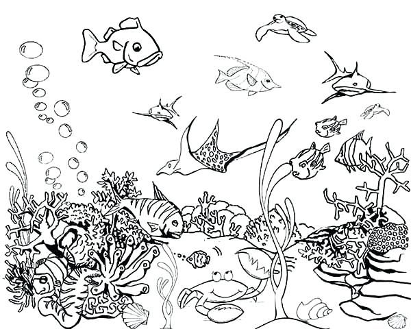 221a7709f2e860ccd2e567dc2708093f » Fish Tanked Colering Pases