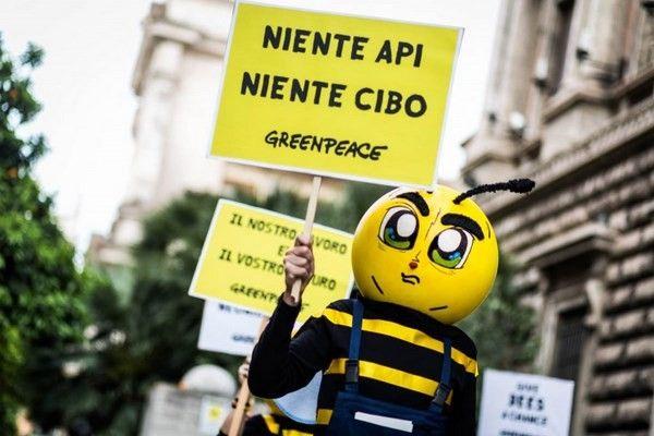 Moria di api, lo sciopero di Greenpeace: «Basta pesticidi killer»