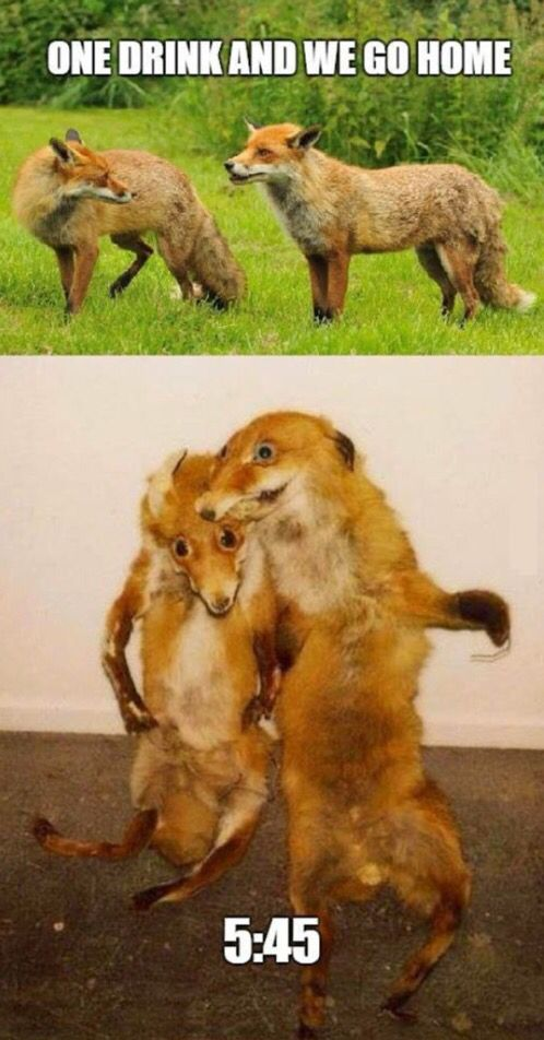 Just Drunk Foxes... LMAO!!!