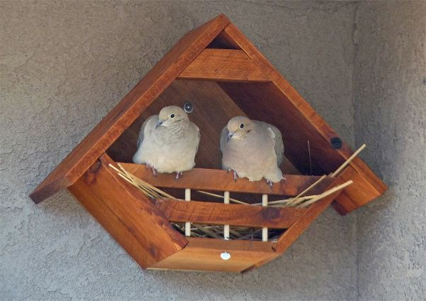 Great Dove Bird House