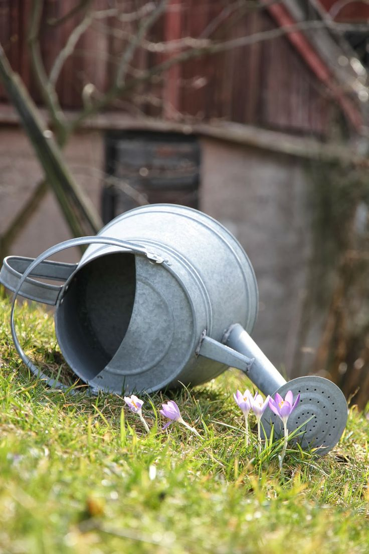 967 best buckets watering cans images on pinterest watering